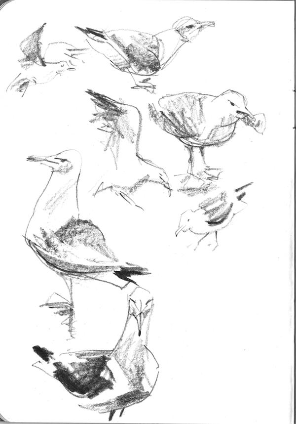 gulls1_600