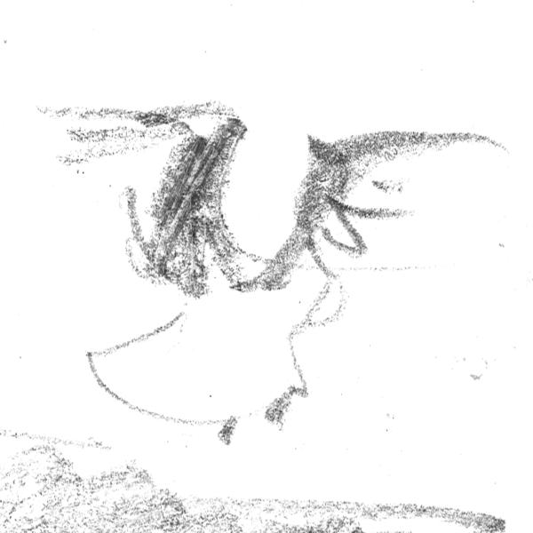 gulls2_sq